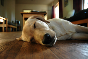chien-gamme-confort